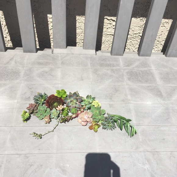 Anthropologie Other - 20 succulent bundle